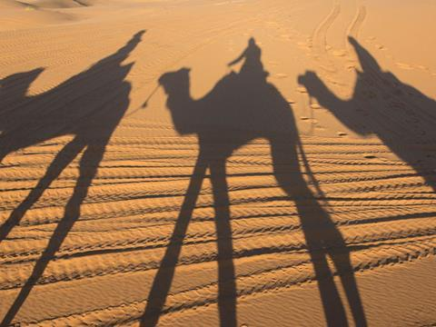 Dubai Camel shadow on the sand dune in Sahara Desert